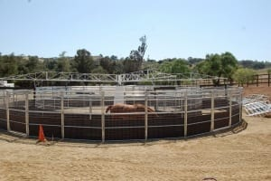 Trax-Equestrian-508